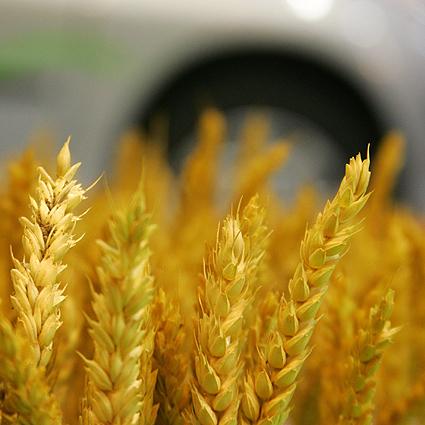 biocombustibles21